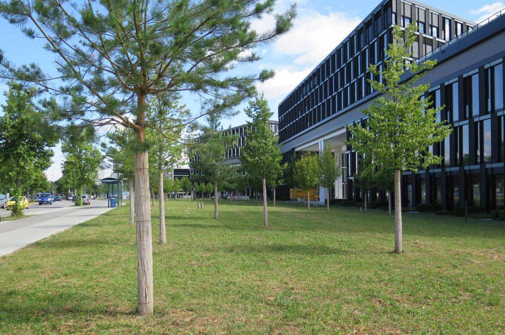Solitär Bäume am Olympiapark