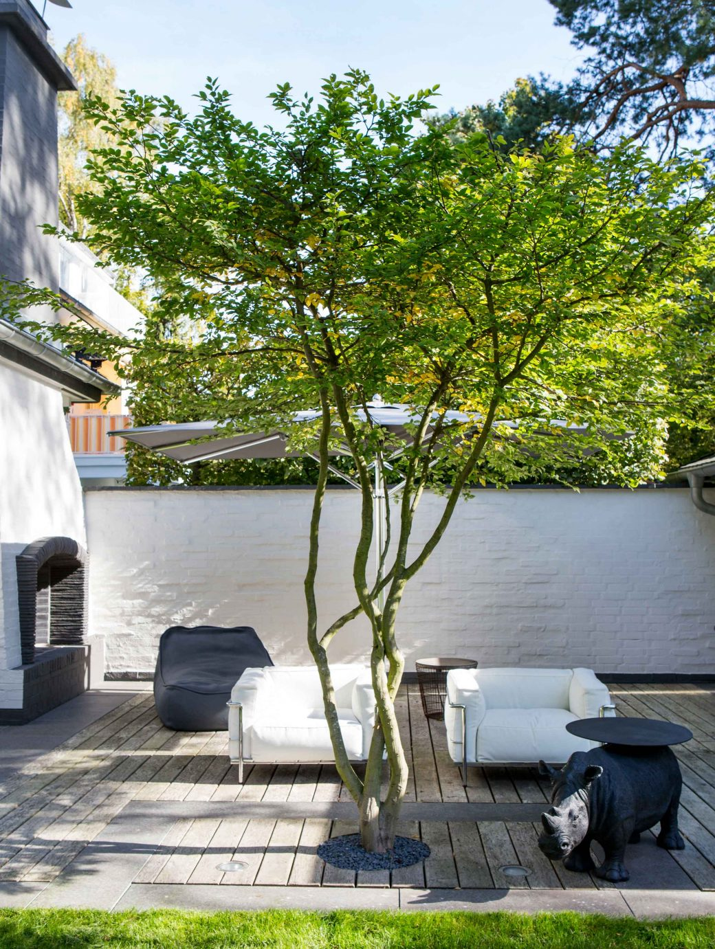 japanische Acer palmatum