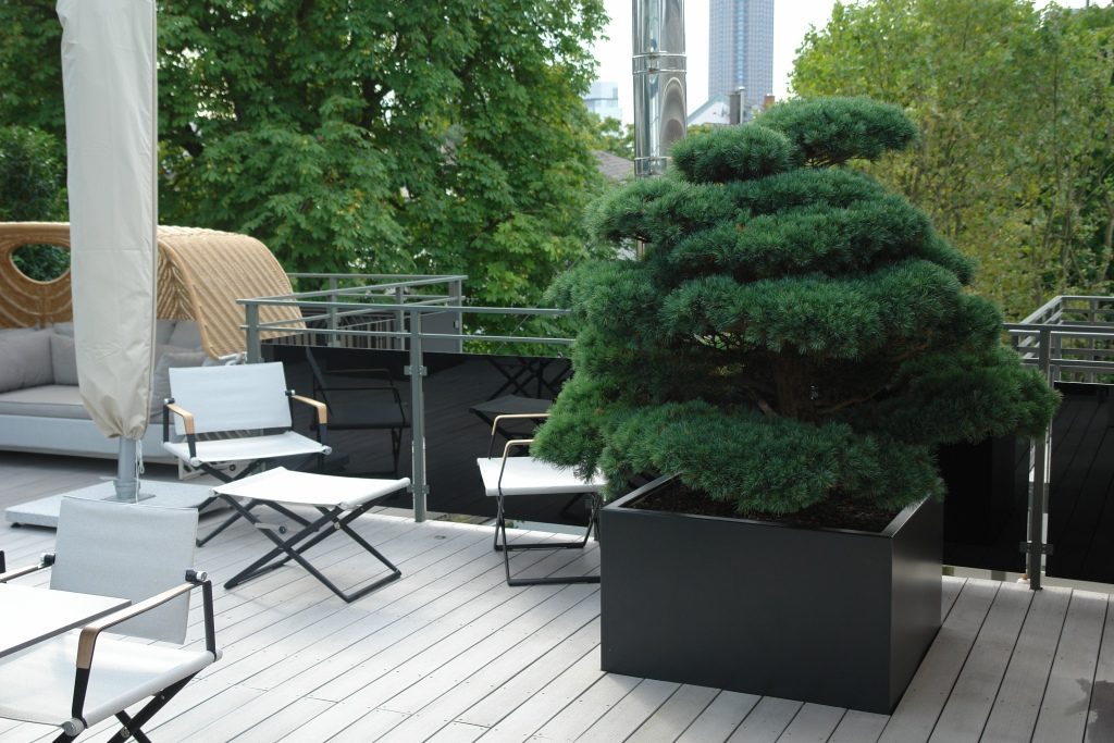 Bonsai Frankfurt rooftop terrace – frankfurt am main | international tree broker