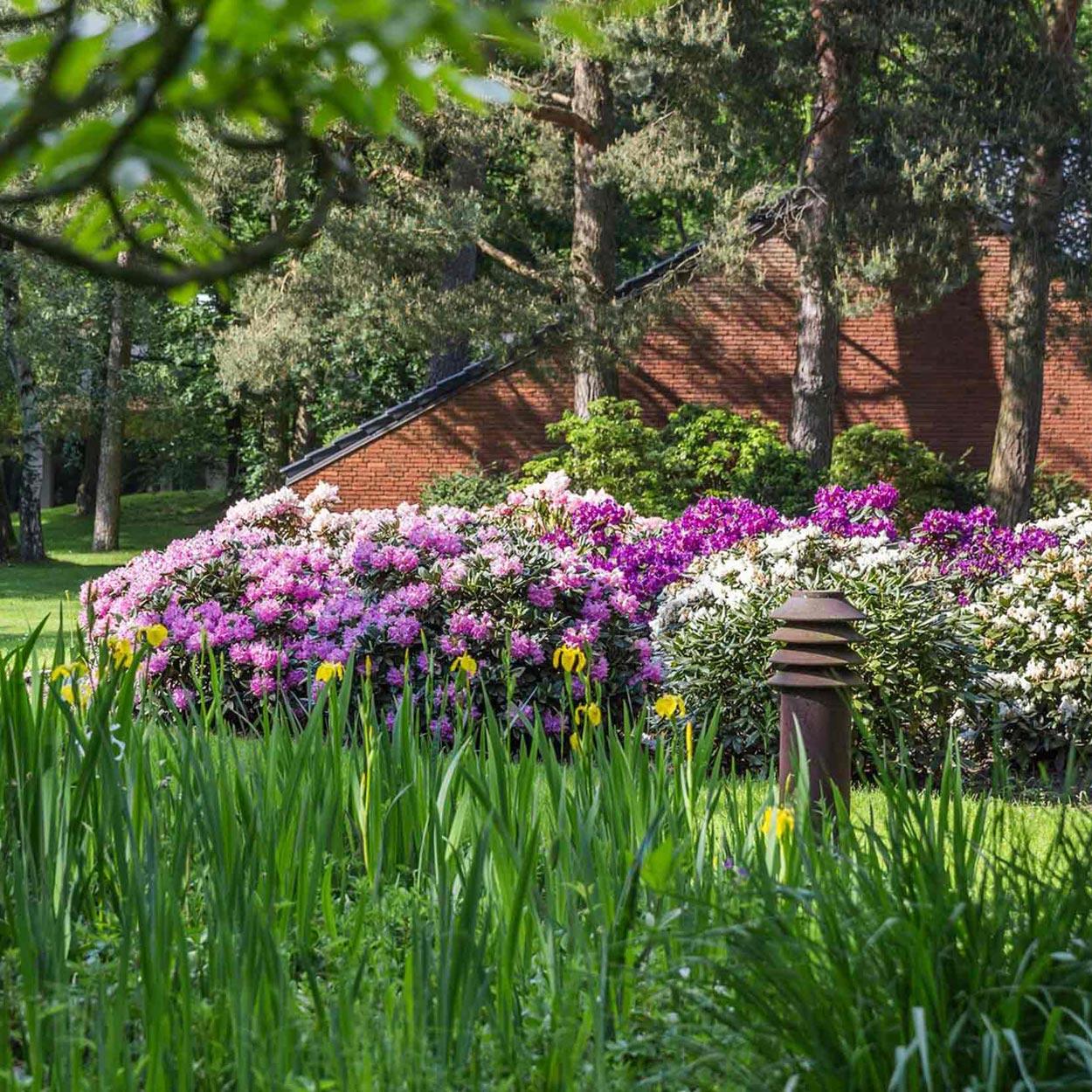 lilafarbenes Blütenmeer