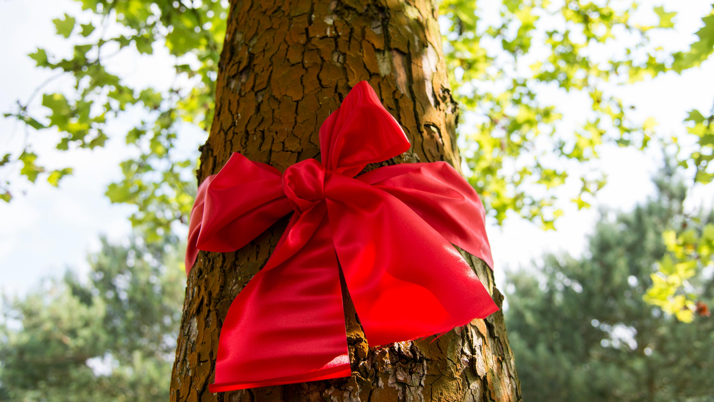 International Tree Broker Baumgeschenk