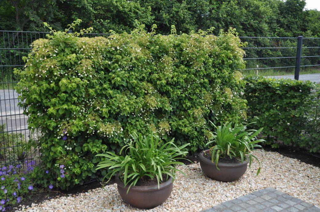 Fertige Heckenelemente die die Gärten blickdicht voneinander trennen