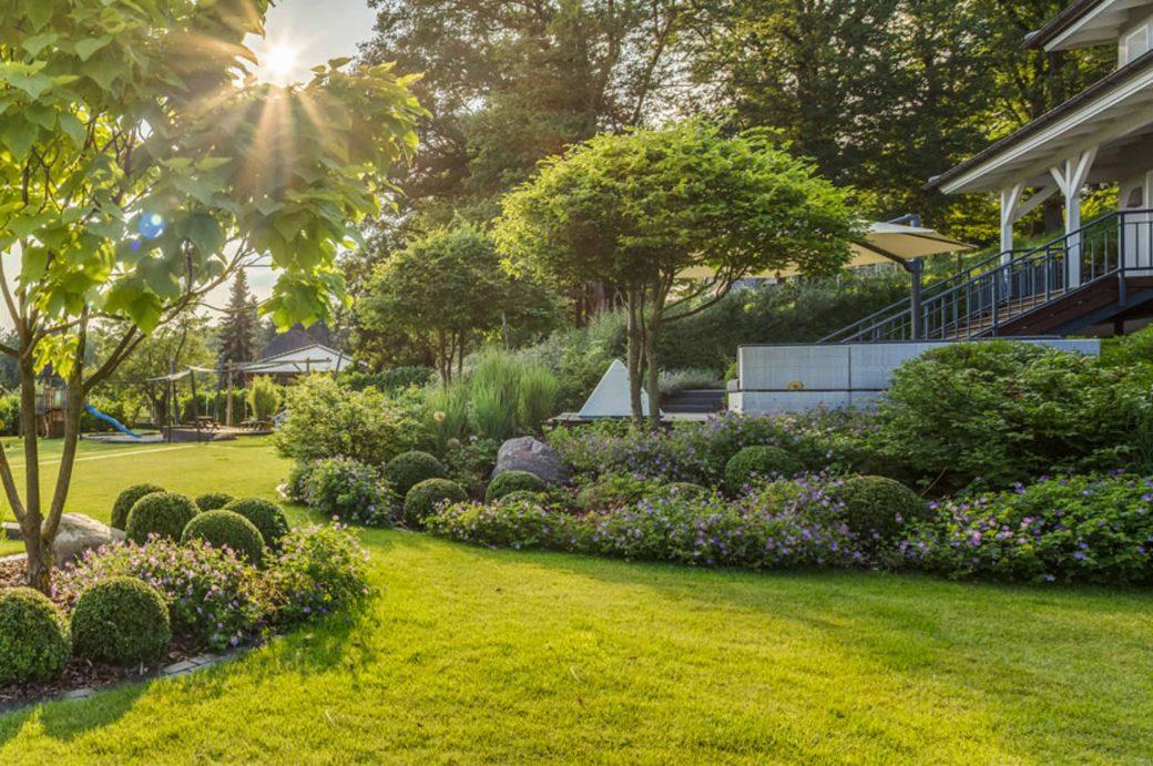 Familiengarten mit mehrstämmigen Carpinus betulus Schirmformen