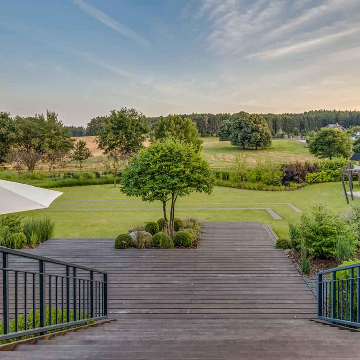 ein Privatgarten mit mehrstämmigen Carpinus betulus Schirmformen