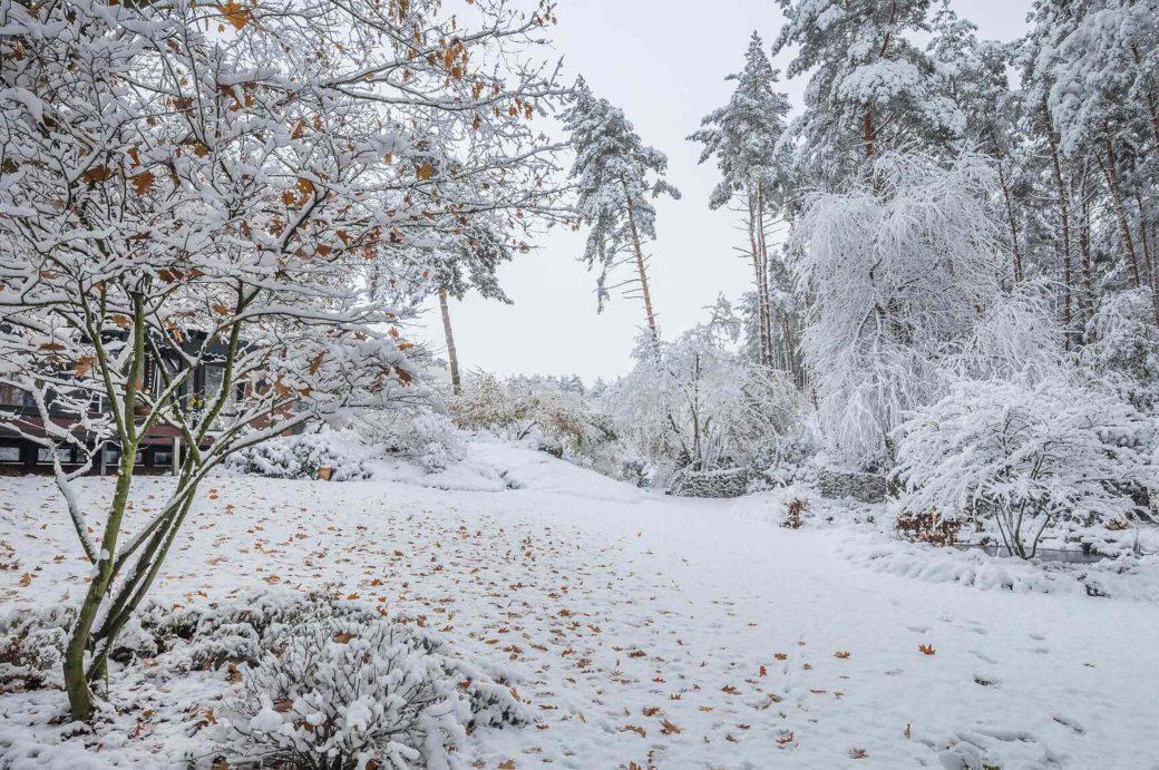 Blick auf weiße Landschaft mit Acer rubrum October Glory