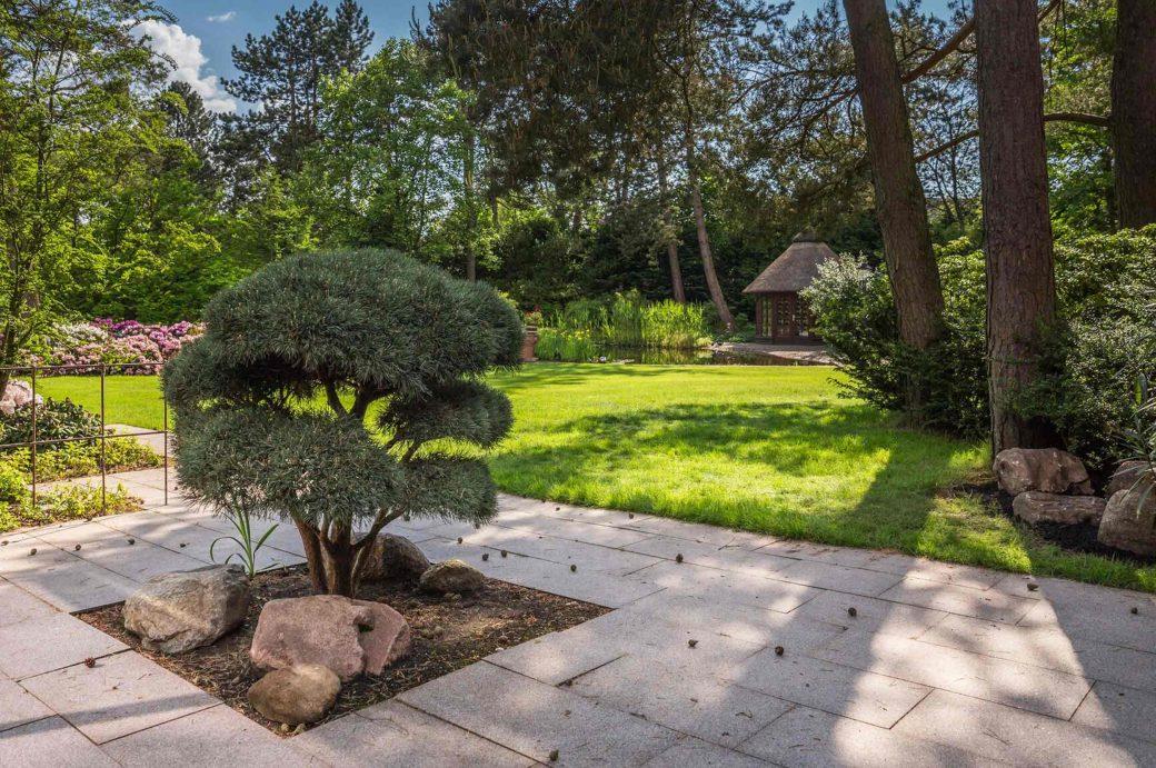Blick auf einen bunten Garten mit Carpinus betulus als Schirmform
