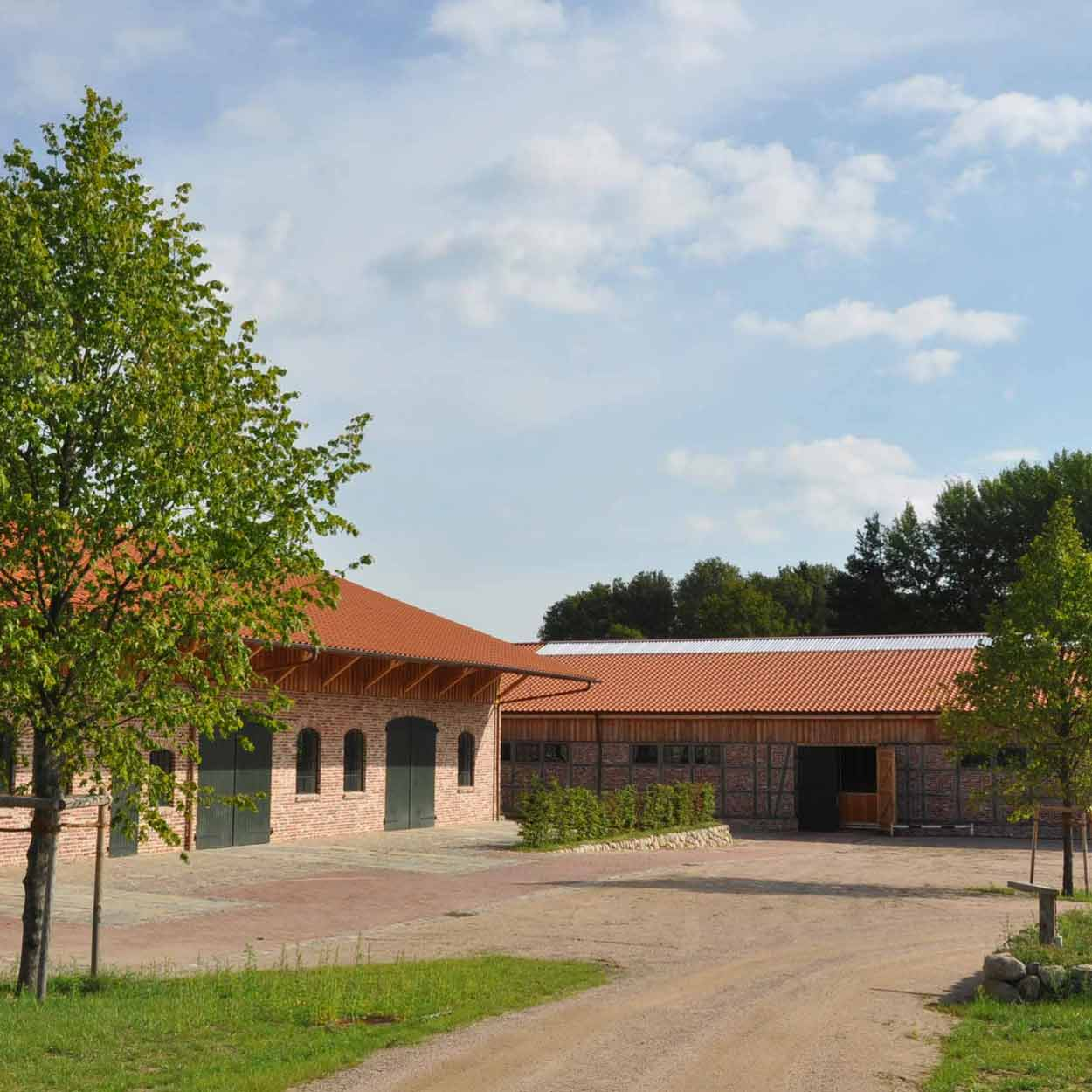 Hof in Niedersachsen mit Tilia europaea Pallida Allee