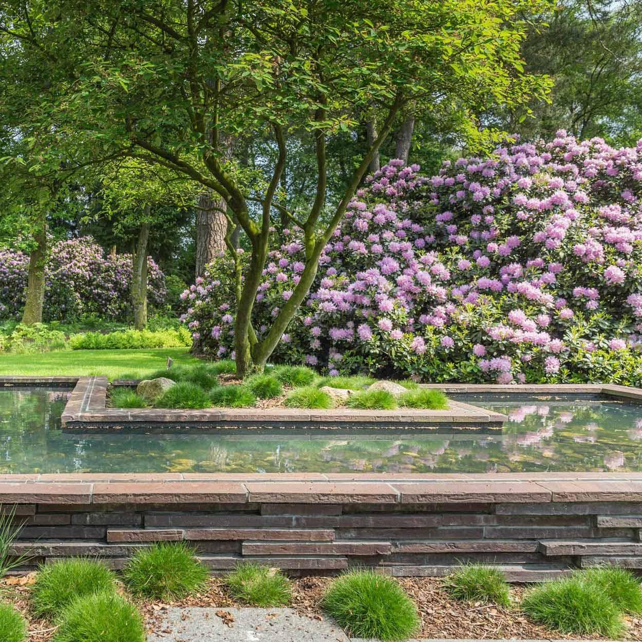 Amelanchier-Solitär-Schirme an einem Wasserbecken mit Hydrangea quercifolia