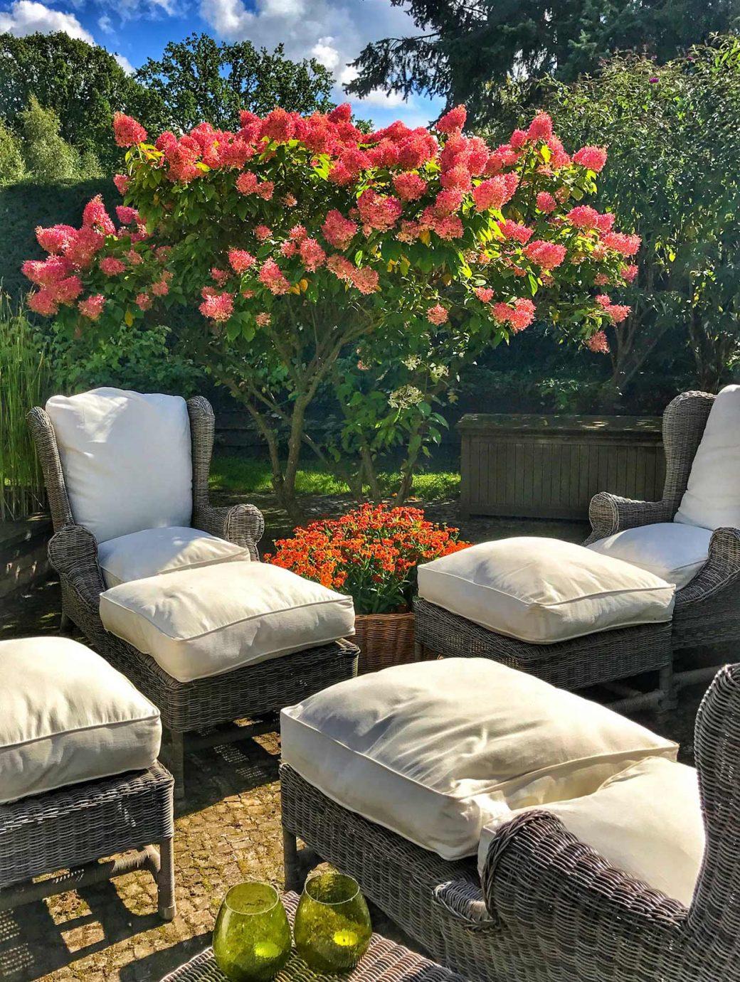 Sitzplatz: Hydrangea paniculata Limelight