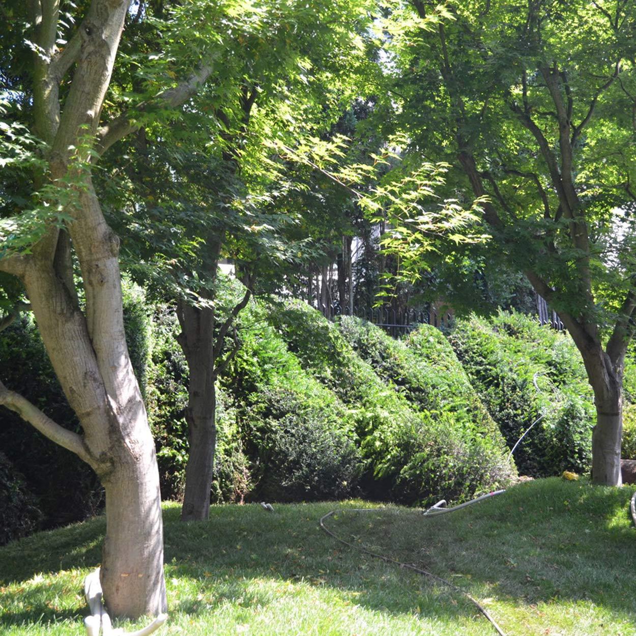 Taxus baccata Wolkenhecke Privatgarten München