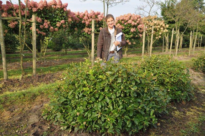 Katharina von Ehren International Tree Broker