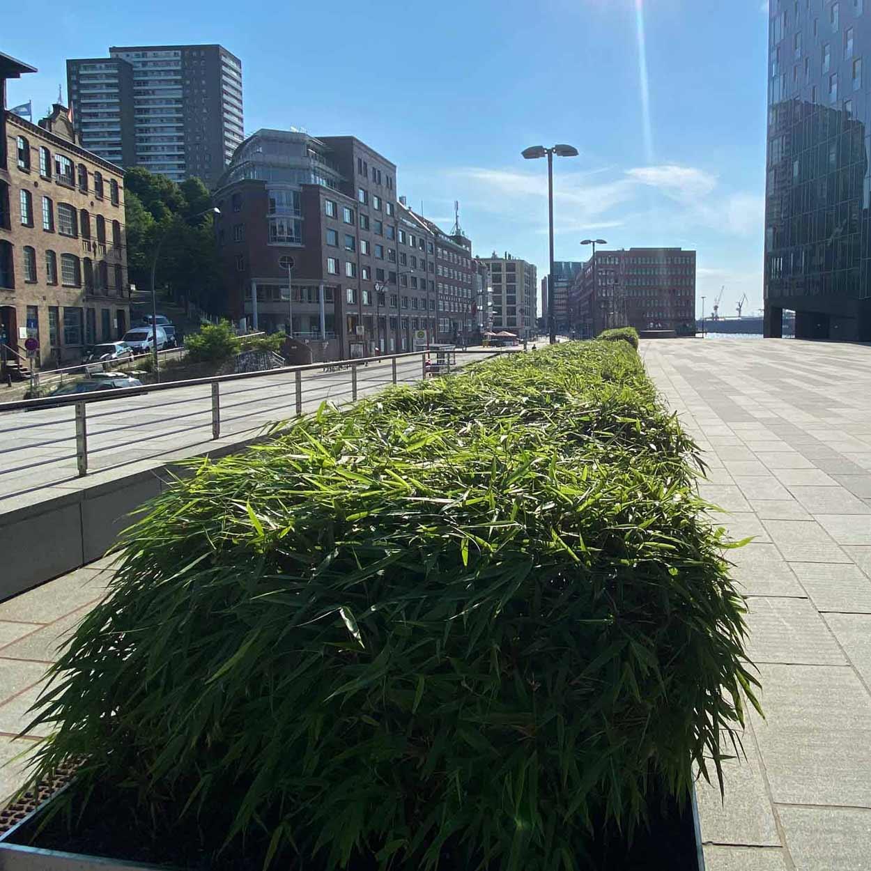 Bambus am Holzhafen