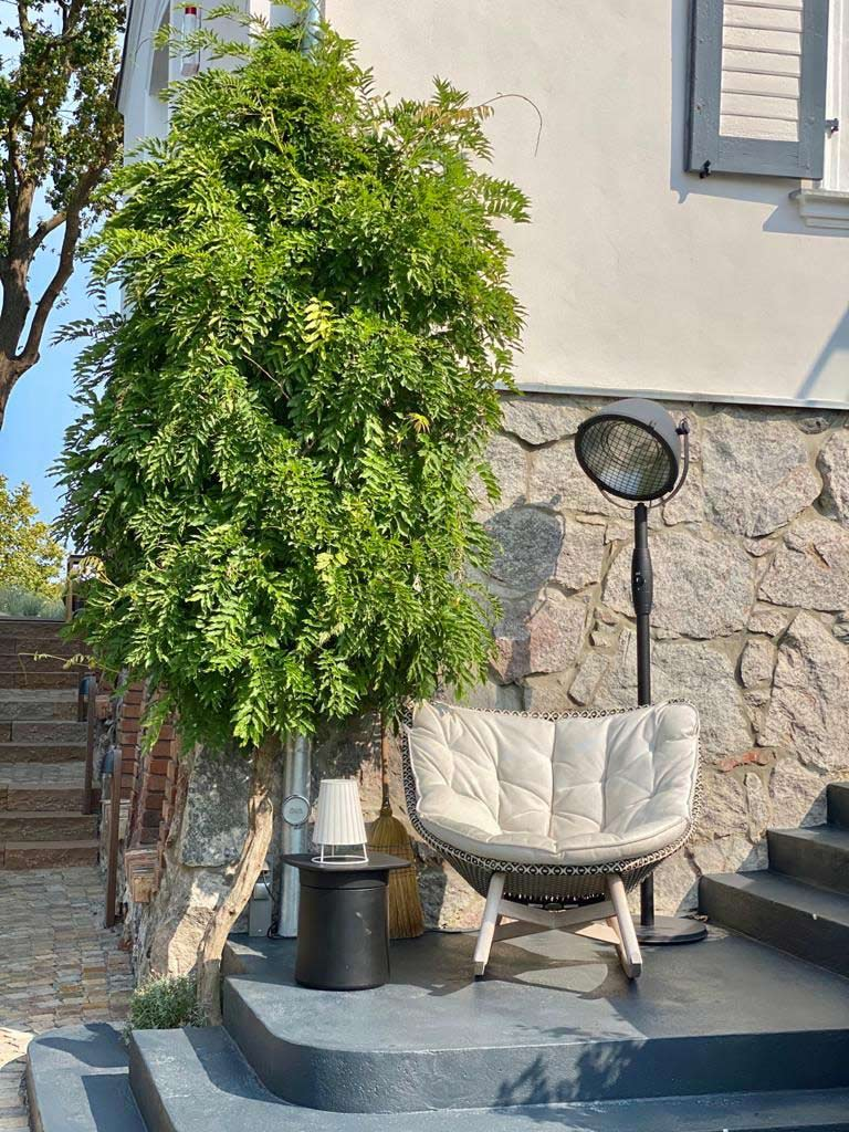 Wisteria sinensis und Wisteria floribunda