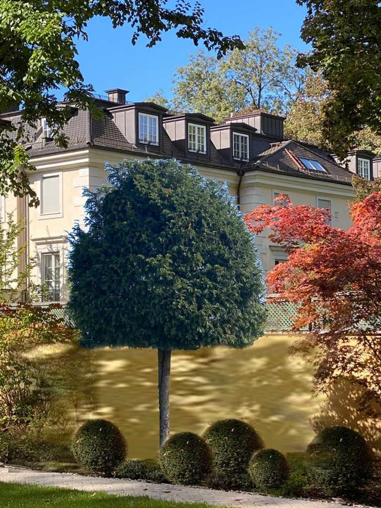 Fotomontage mit Baum